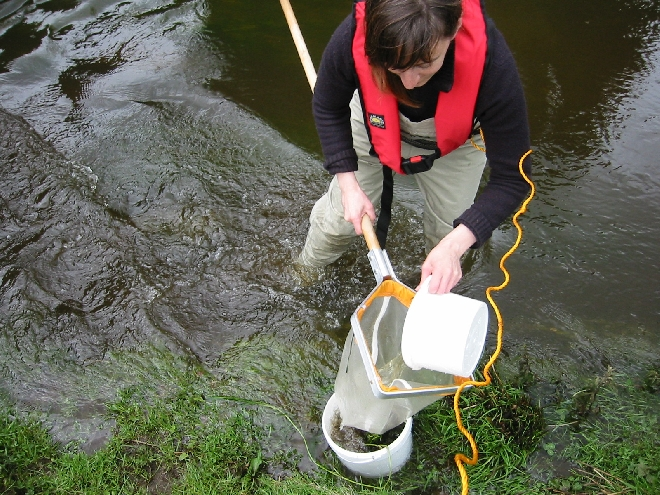 Image of Aquatic Toxicity Testing